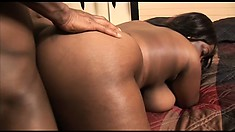 The chunky babe loves to get banged doggy style and to bounce on his huge dick