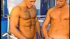 After their boxing workout, two hunky studs explore their gay desires