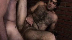 Hairy stud gives a great blowjob and then gets his ass drilled deep